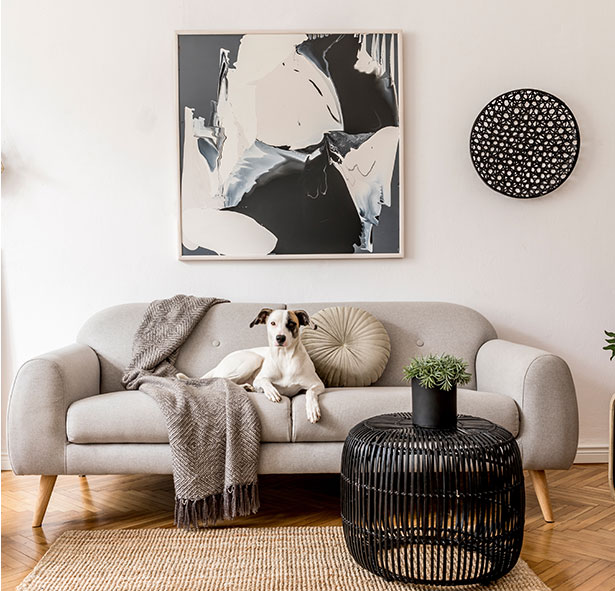 Picture of a sofa with a dog on it